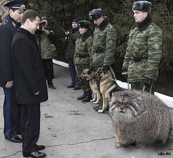 Soldier with guard Manul