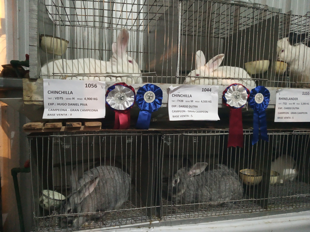 winningbunnies